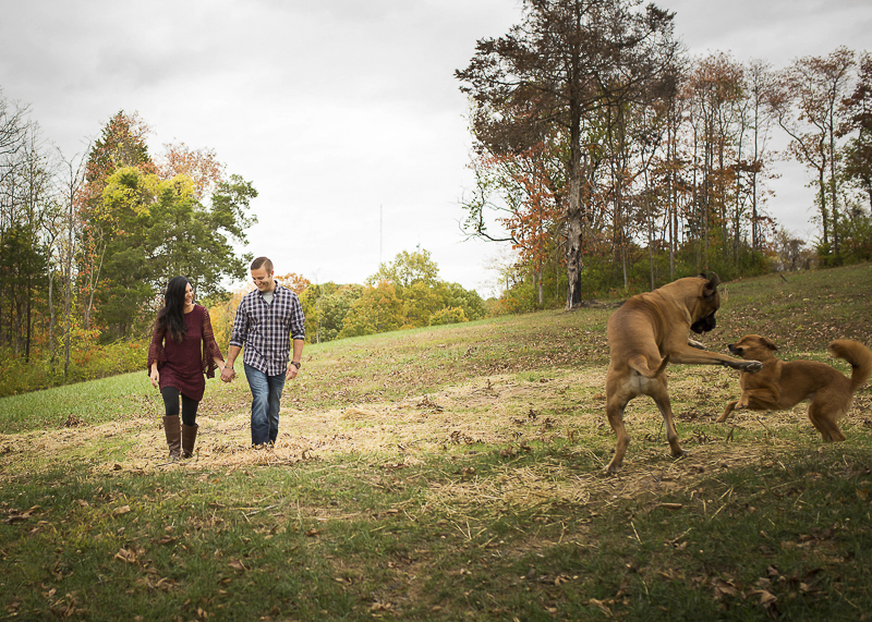 English Mastiff and mixed breed playing, outdoor engagement photos with dogs, ©Irish Eyes Photography