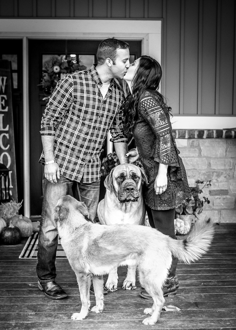 family portraits with English Mastiff and mixed breed