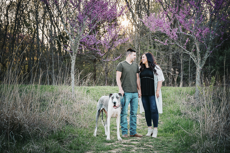 Spring engagement photos with a Great Dane | ©Irish Eyes Photography Wentzville, MO