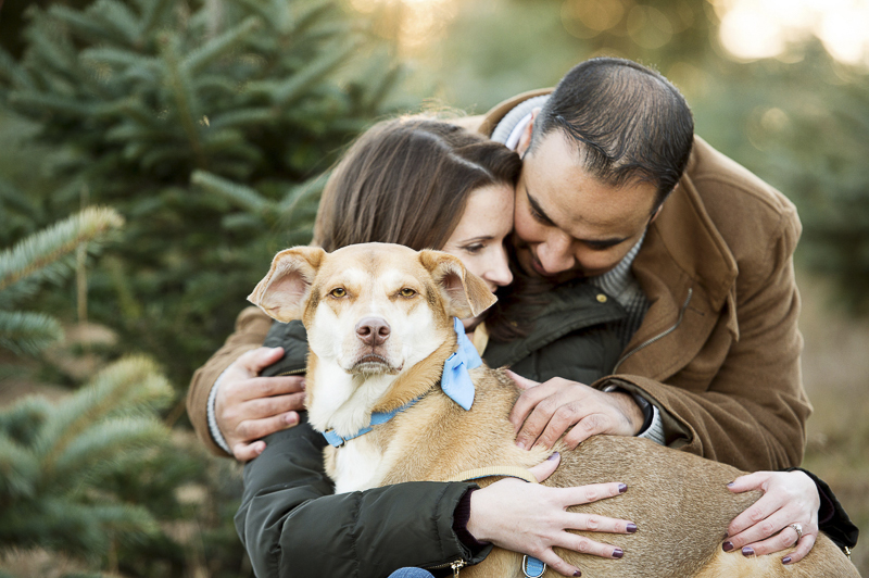 handsome mixed breed and family | New Milford, CT, lifestyle family photography