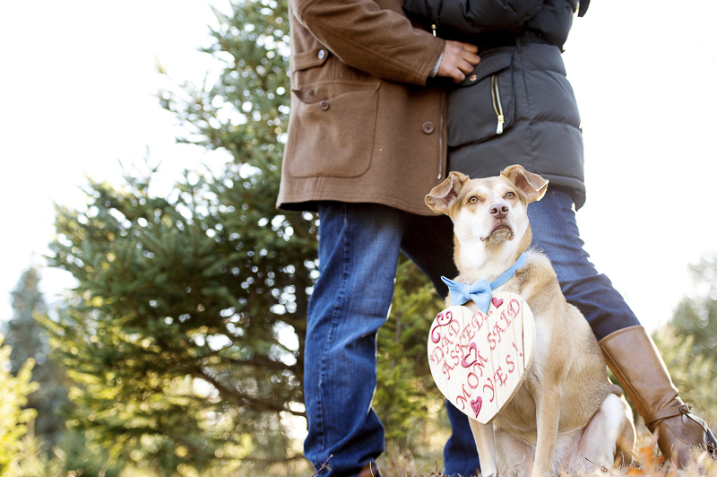 handsome dog wearing Save-the-Date sign | ©Julia Jane Studios, CT dog friendly winter engagement photos