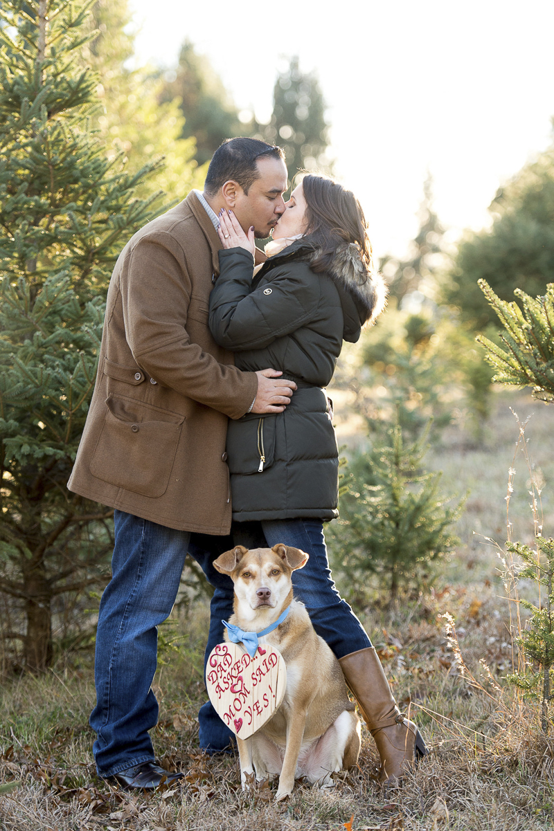 Mixed breed wearing save the date sign, dog-friendly engagement photos, New Milford, CT, ©Julia Jane Studios