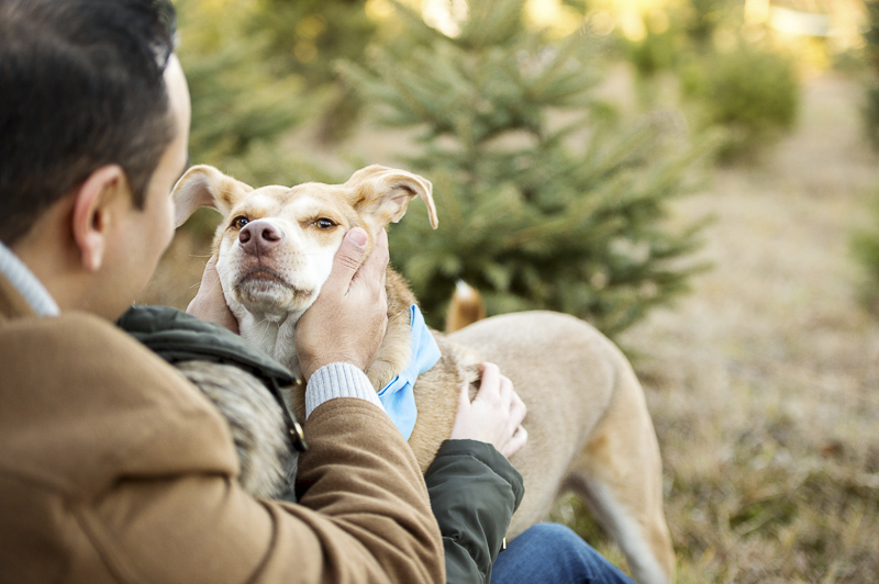 ©Julia Jane Studios | mixed breed at Christmas tree farm, love between dogs and people