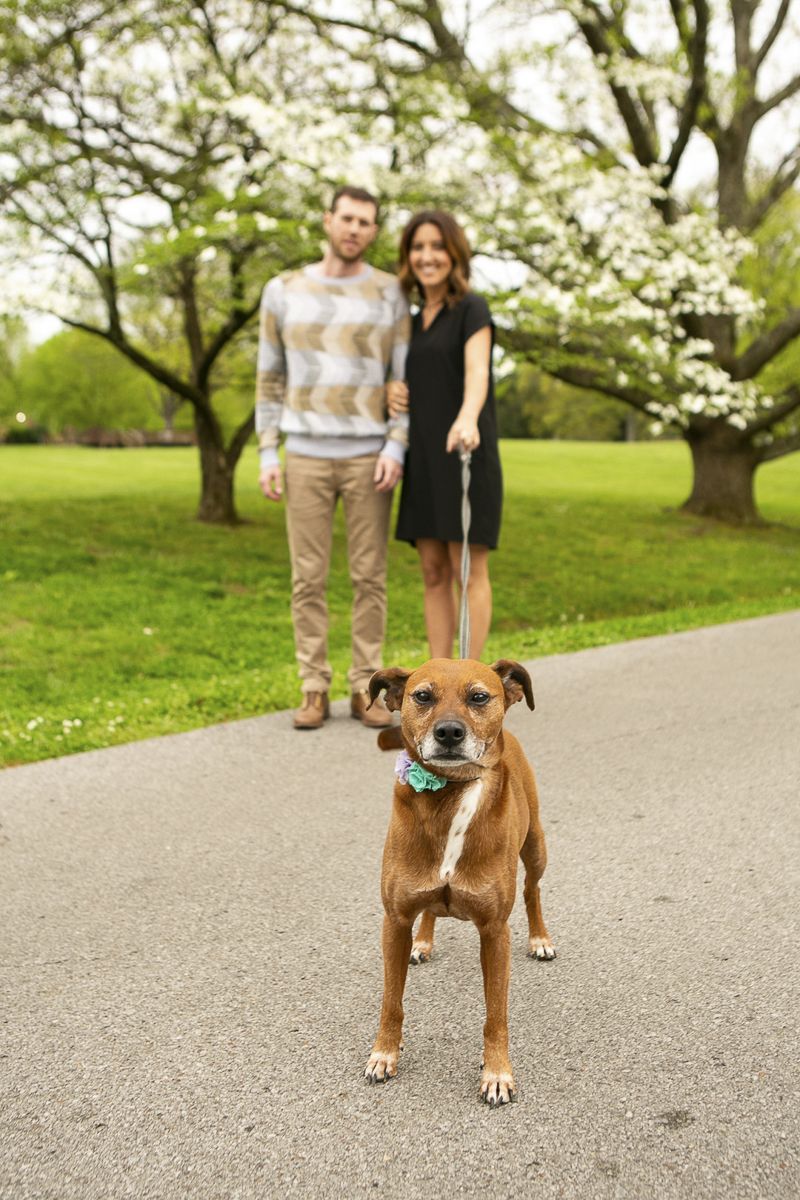 Springtime family portraits with a dog, Nashville, TN, ©Mandy Whitley Photography
