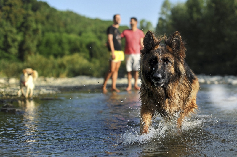 German shepherd splashing in the river, ©Martina Campolo Photography