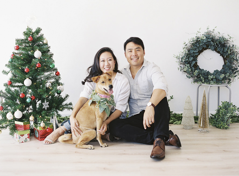 Formosan Mountain Dog mix, ©Stephanie Gan Photography | Studio holiday photos with a dog