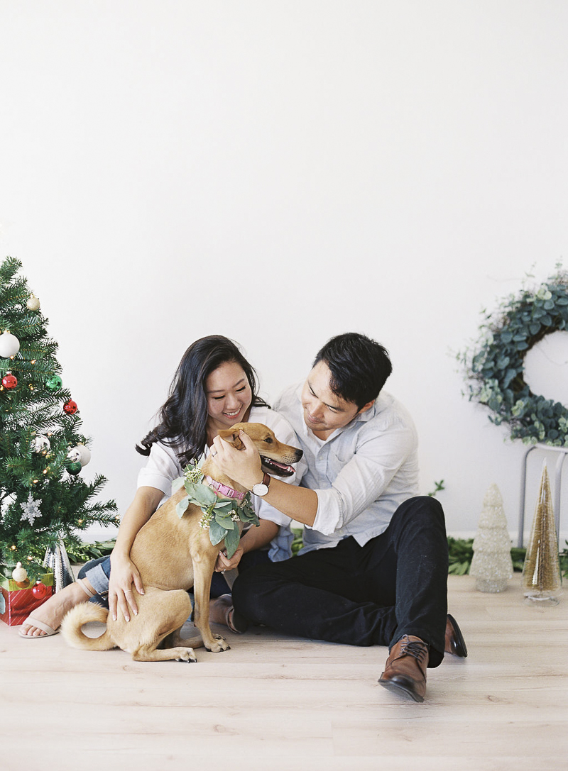Bay Area studio dog photography, pet-friendly holiday pictures ©Stephanie Gan Photography