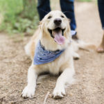 Engaging Tails:  Izzy the Golden Retriever In Castlewood State Park