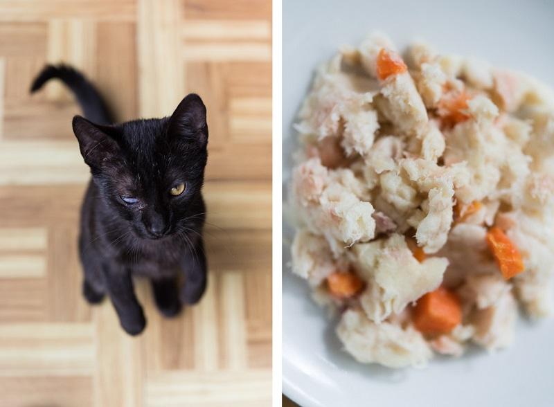 best cat food, NomNomNow