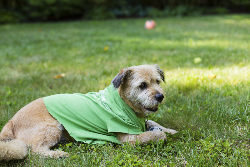 cute mixed breed lying in the grass, outdoor photography, ©Katy Murray Photography