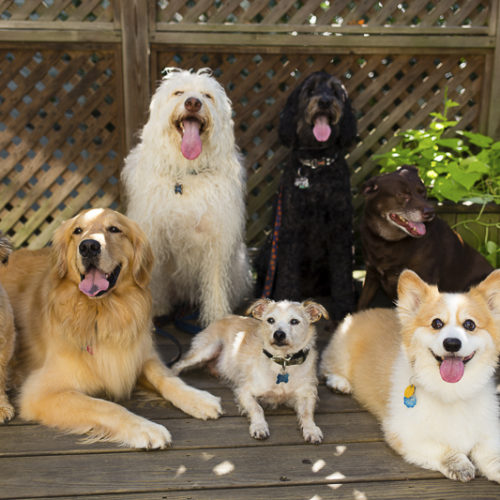 Happy Tails: Mr. River Biscuit and Friends