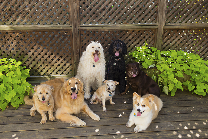 7 dogs on deck, outdoor dog photography, ©Katy Murray Photography | lifestyle dog photography