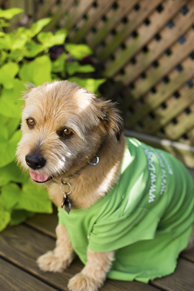 adorable mixed breed named Mr. River Biscuit, ©Katy Murray Photography   lifestyle dog photography