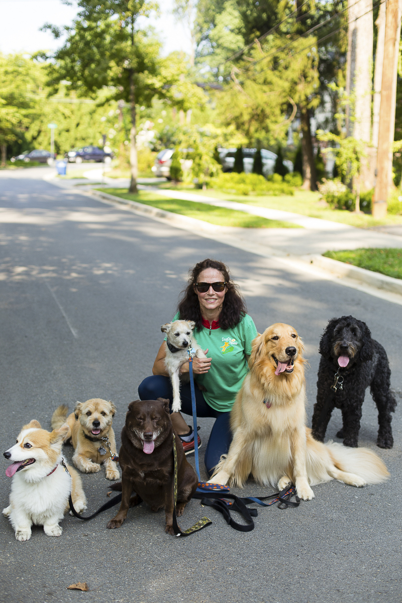 dog walker and six dogs, ©Katy Murray Photography | lifestyle dog photography