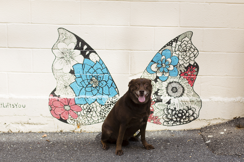 sweet senior dog in front of mural, graffiti dog ©Katy Murray Photography | outdoor dog portraits