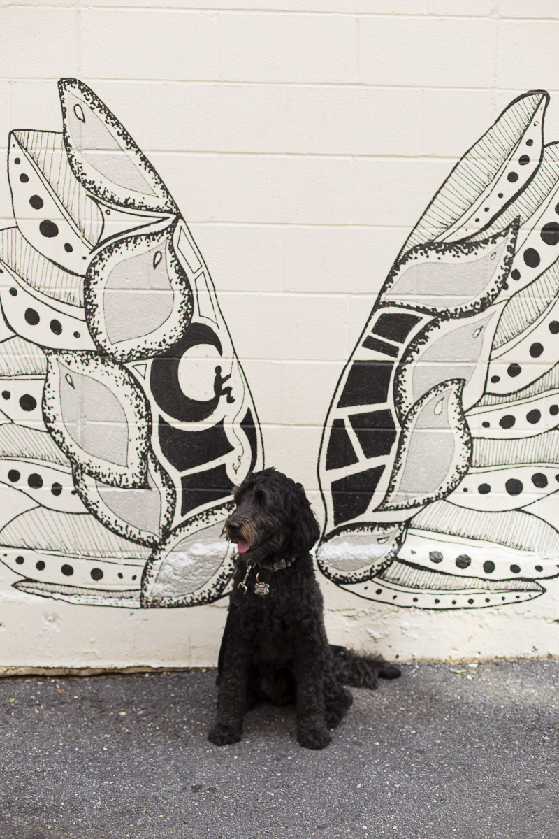 dog in front of wing mural, ©Katy Murray Photography | outdoor dog portraits