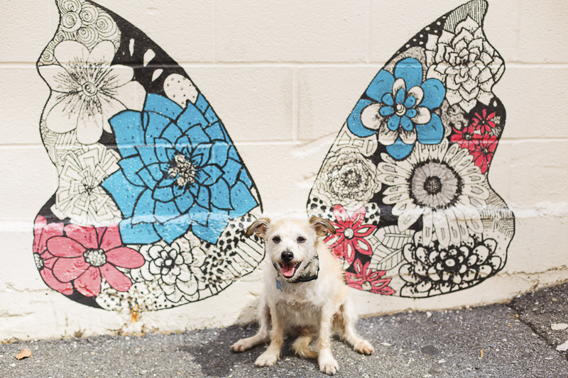 mixed breed in front of wings mural, angel dog, ©Katy Murray Photography | lifestyle dog photography