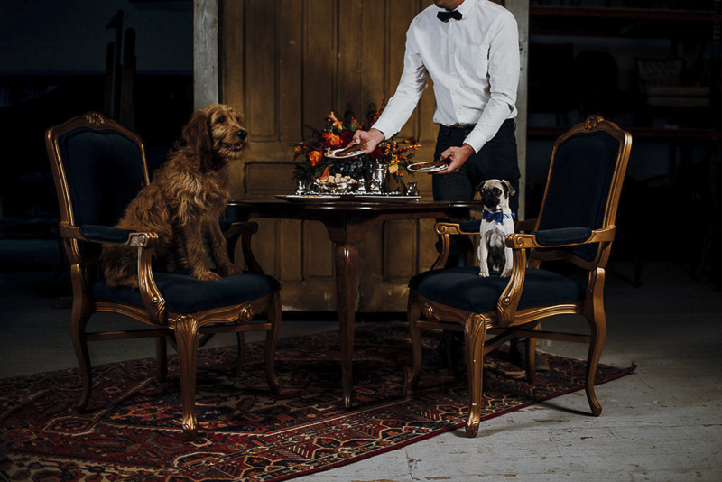 puppies being served by butler | Sip & See party for puppies | ©Suzuran Photography