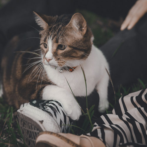 Caturday:  Cat-Friendly Engagement Session