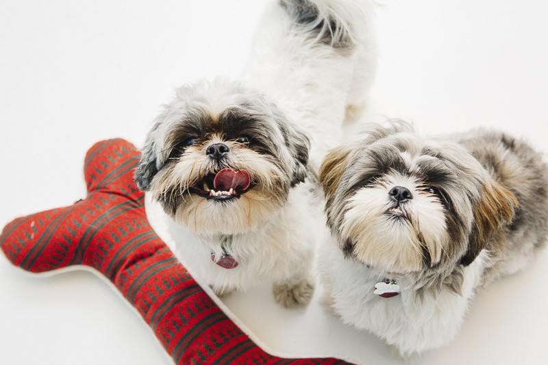 dog-friendly Christmas studio session