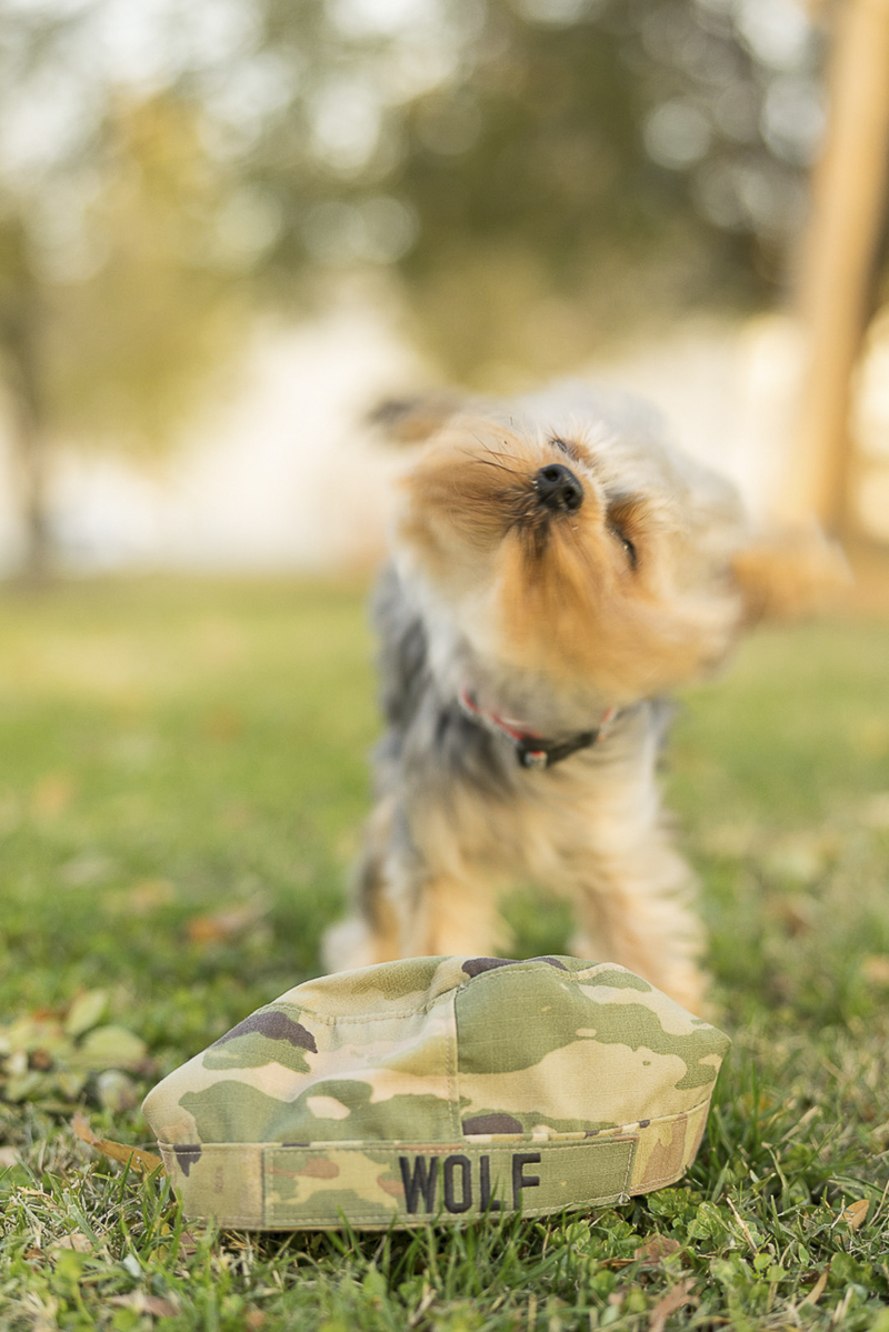 Yorkshire Terrier and military cover, ©Imagery by Erin | lifestyle dog photography