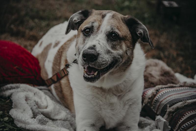handsome mixed breed dog, ©Nathalia Frykman Photography | lifestyle dog photography