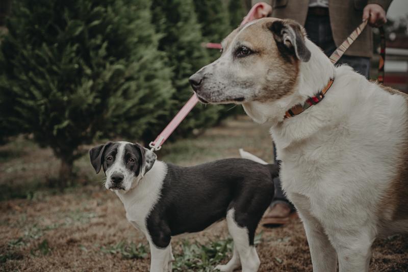 ©Nathalia Frykman- lifestyle dog photoshoot, Carrollton, Georgia dog photography