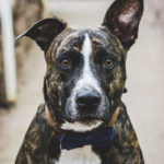 Engaging Tails:  Spock the Mixed Breed In Boyce Thompson Arboretum
