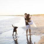 Engaging Tails: Mocha the Labrador Retriever