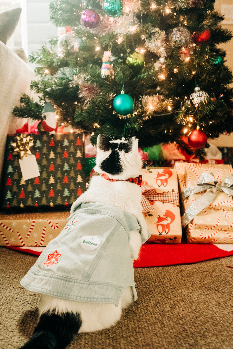 cat wearing I believe vest looking up at Christmas tree