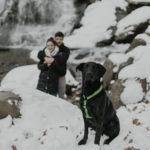 Engaging Tails:  Jax the Shepherd-Labrador mix