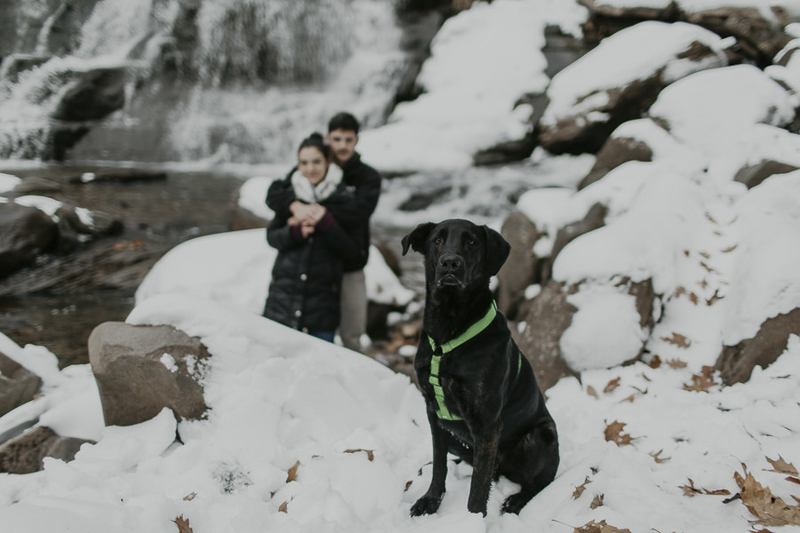 Shepherd-Labrador mix sitting on snow with couple in back ground, engagement photos with a dog | ©Belle La Vie Images