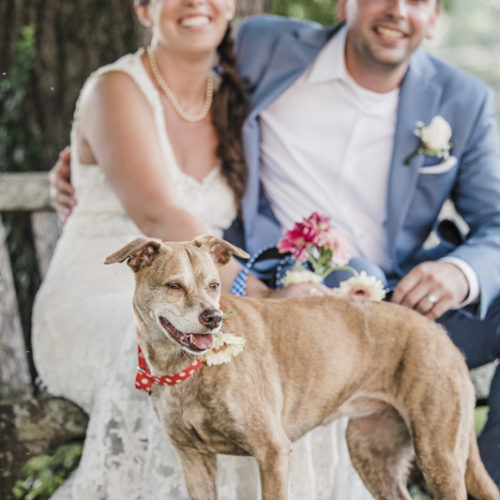 Best (Wedding) Dog:  Sawyer the Feist Terrier Mix