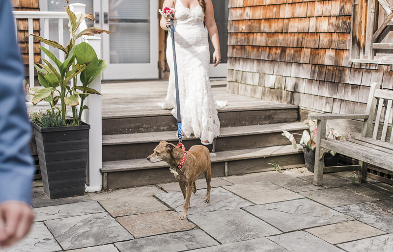 bride and her Feist Terrier mix dog | ©Landrum Photography | dog-friendly wedding