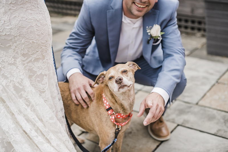 cute senior dog and her favorite couple (bride and groom) ©Landrum Photography | dog-friendly wedding
