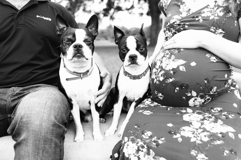 black and white dog portraits | dog-friendly maternity session ©Amber Elaine Photography