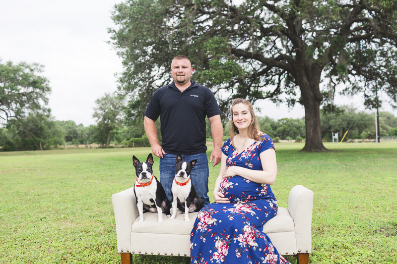 maternity session with Boston Terriers, Seguin, Texas, humans and dogs sitting on loveseat | ©Amber Elaine Photography