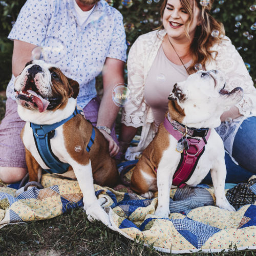 Happy Tails: English Bulldogs And Bubbles