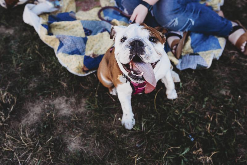©Irish Eyes Photography | lifestyle dog portraits, cute dog pohotography