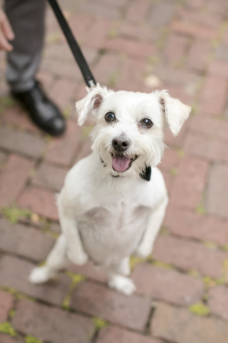 adorable mixed breed dog standing on hind legs | ©Jeannine Marie Photography | St Paul wedding photography, dog-friendly venue, Minnesota Boat Club
