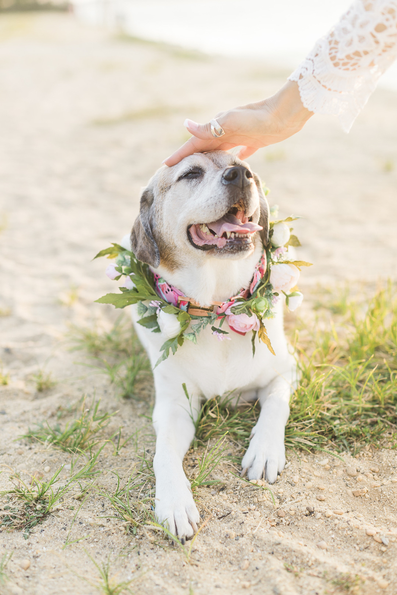 dog lying on the sand enjoying a head pat by woman | elegant dog and human portraits, ©Kelly Sea Images | NJ lifestyle dog and portrait photography
