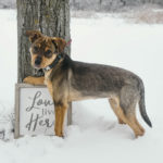 Puppy Love: Toby the Adorable Mixed Breed