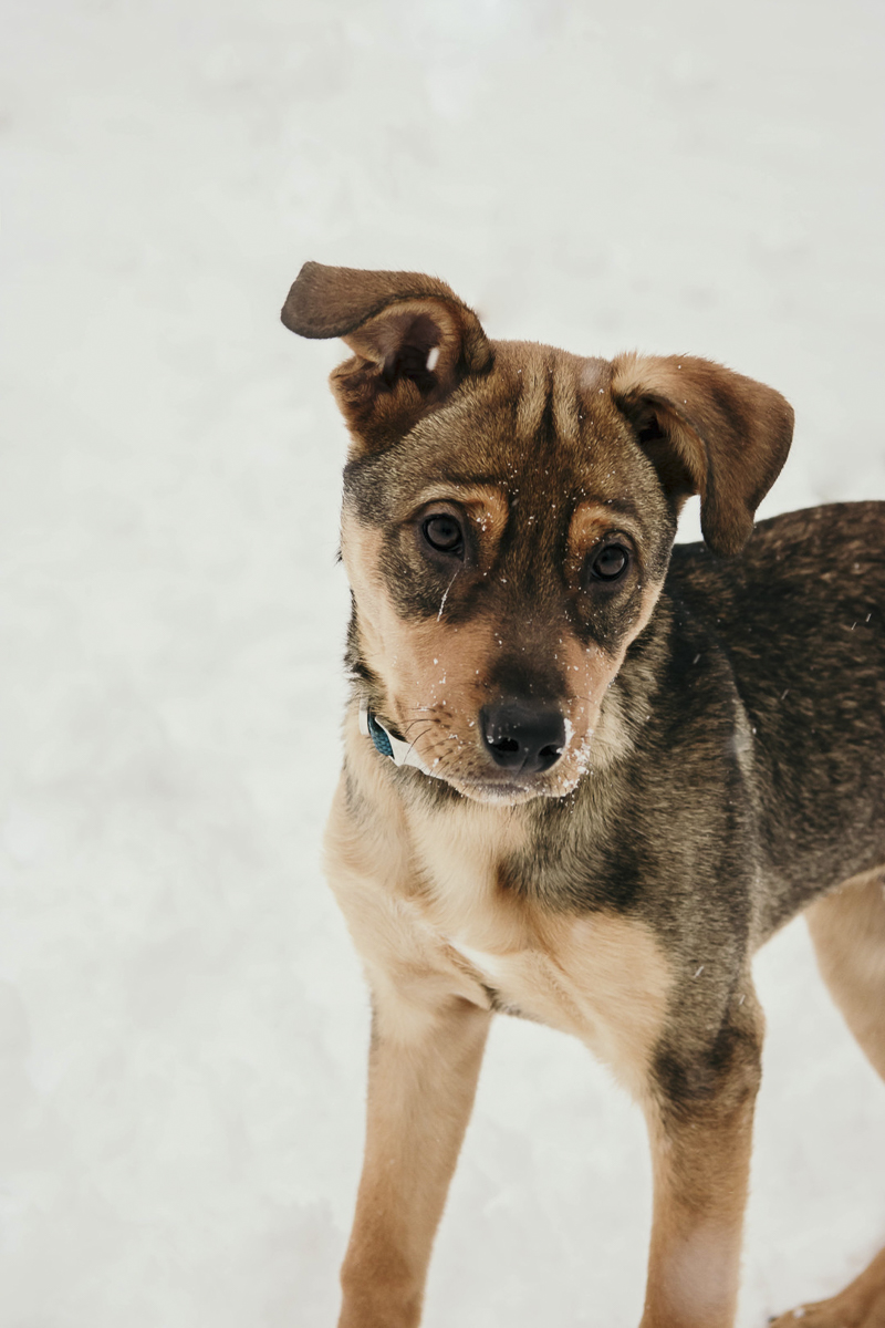 Adorable mixed breed puppy playing in the snow | ©Madison Robertson Photography winter portrait ideas