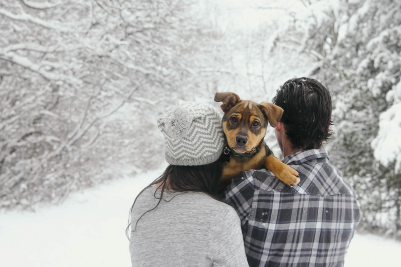 cute puppy looking at photographer while over human's shoulders, couple on a snowy day ©Madison Robertson Photography |  winter puppy photos