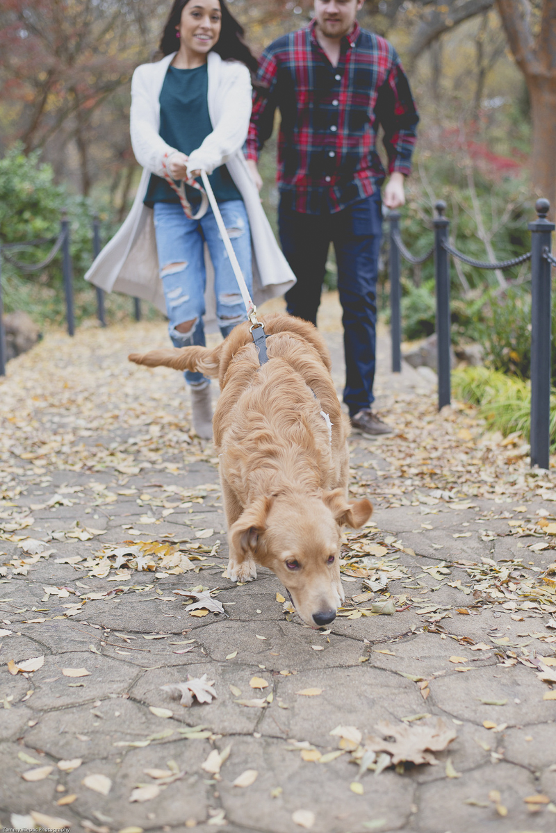 Golden Retriever running on leash | ©Tammy Klepac Photography