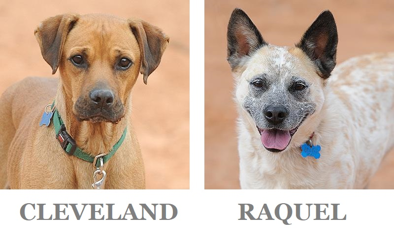 Adoptable Dogs-Best Friends Animal Sanctuary