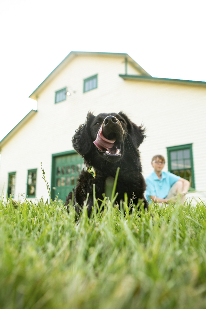 Ringo Starr the puppy with tongue out lying in front of barn, boy in the background, boy and his dog, ©Mandy Whitley Photography | Nashville puppy portraits