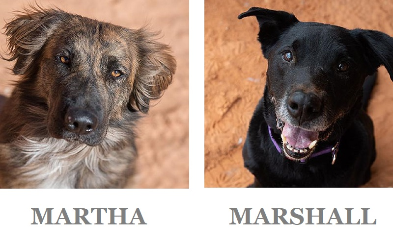 Adoptable Shepherd mix & black Lab mix, Best Friends Animal Sanctuary