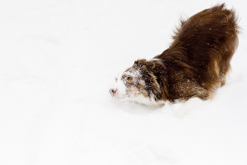 dog with snow all over his face, cute photos of dogs | ©Beth Alexander Pet Photography |