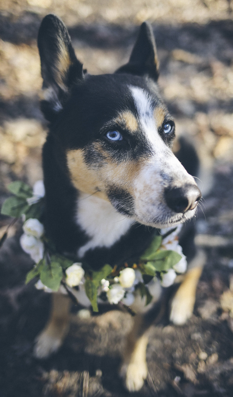 ©Katie Jean Photography | mixed breed wearing floral wreath